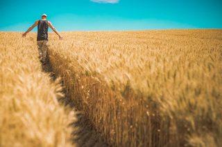 Ayudas a la primera instalación de agricultores jóvenes y la modernización de las explotaciones agrarias